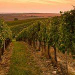Online de beste wijnen zoeken